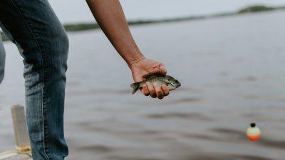 Digitalisierung in der Fischzucht