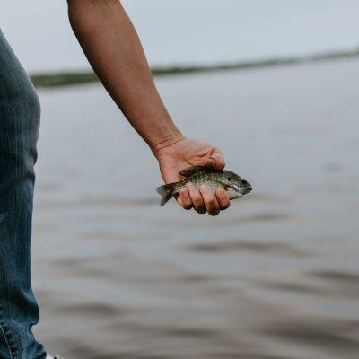 Unternehmer betreibt digitale Fischzucht