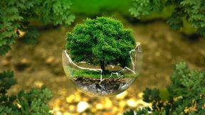 Ein Baum steht in einer zerbrochenen Glaskugel.